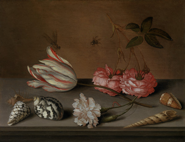 A tulip, a carnation and roses, with shells and insects, on a ledge