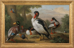 Jacob Bogdani - A Muscovy duck, a mallard, shelducks, a pochard and a ruff, with a kingfisher in a river landscape