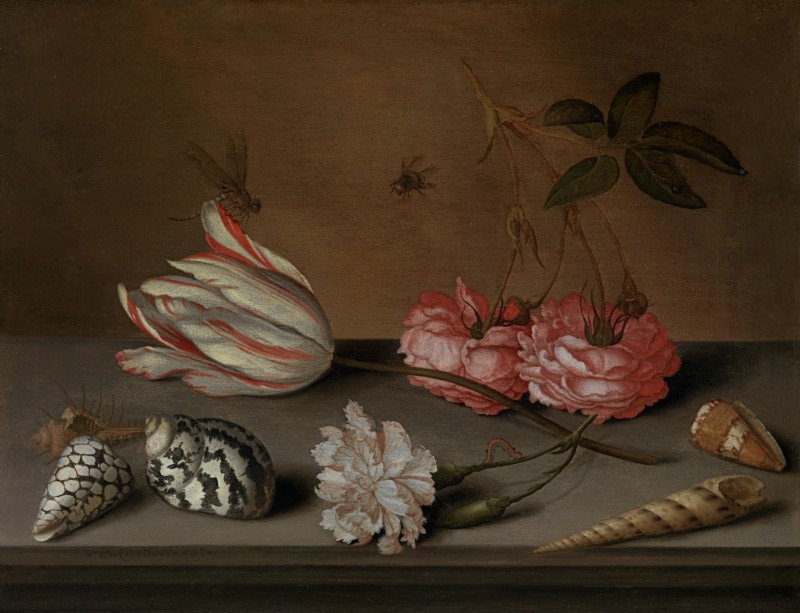 Balthasar van der Ast - A tulip, a carnation and roses, with shells and insects, on a ledge